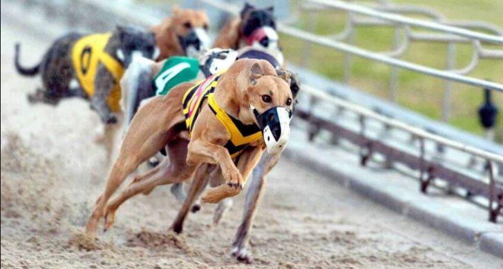 Cuộc đua Chó đầy gay cấn