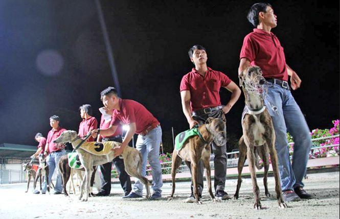 Huấn luyện viên hay chủ nhân của các vận động viên Chó