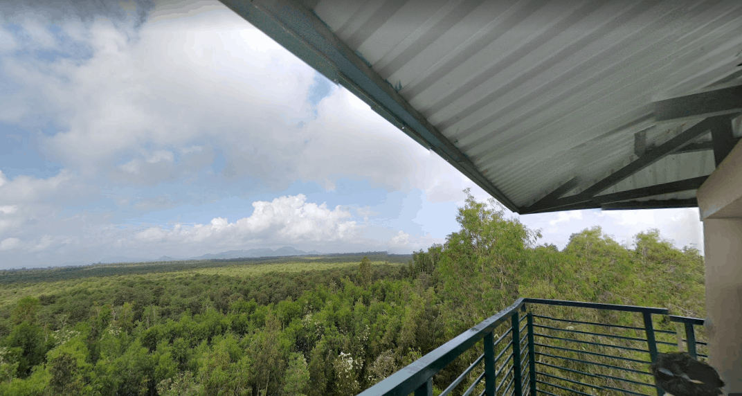 Ngắm nhìn rừng tràm Trà Sư từ trên đài quan sát