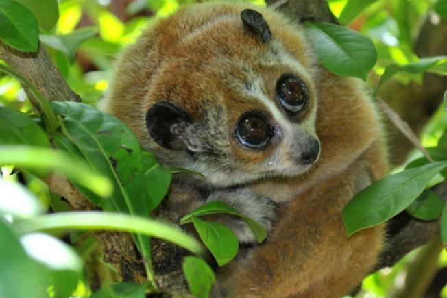 Những con Cù Lần dễ thương với đôi mắt to tròn đẹp nhất thế gian