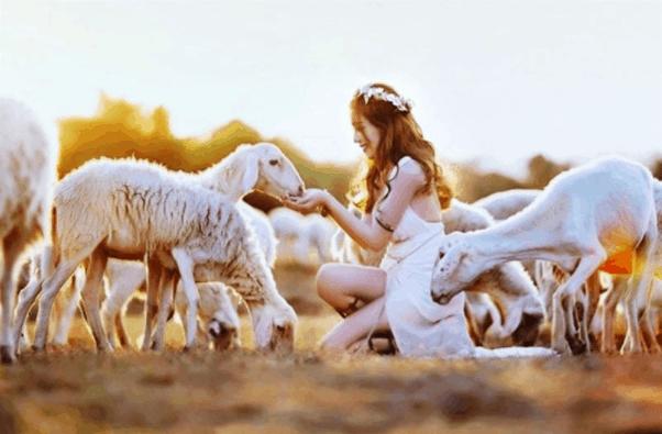 Chụp ảnh tuyệt đẹp tại Cánh đồng cừu - Vũng Tàu