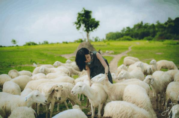 Đẹp ngỡ ngàng với bức ảnh được chụp tại cánh đồng cừu