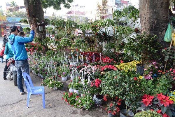 lung linh sắc hoa