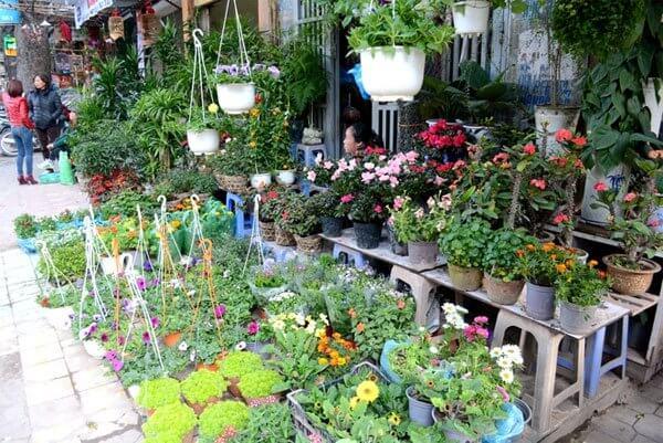 sắc hoa ở chợ Hoàng Hoa Thám
