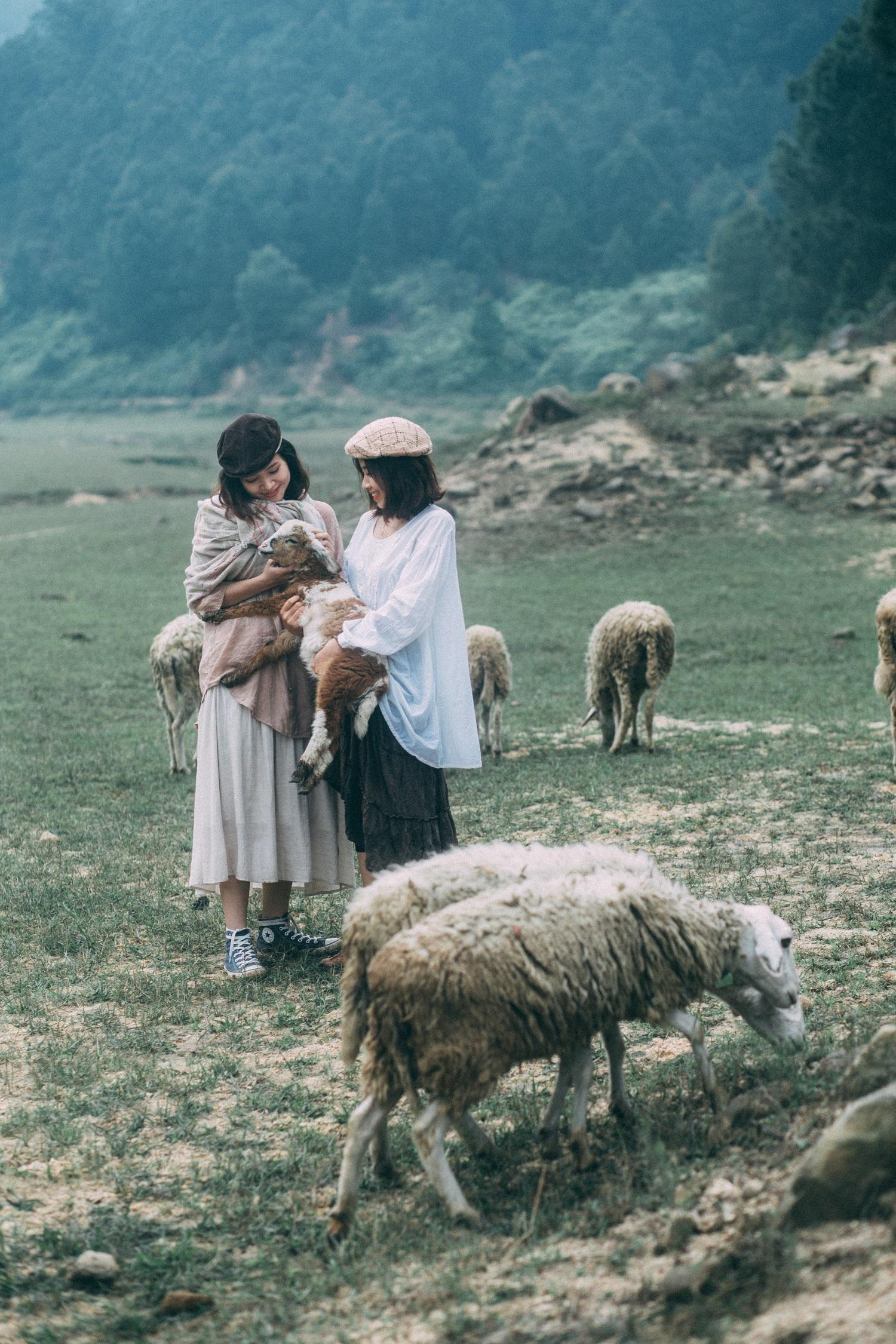 địa điểm du lịch nghệ an: cánh đồng nuôi cừu-01