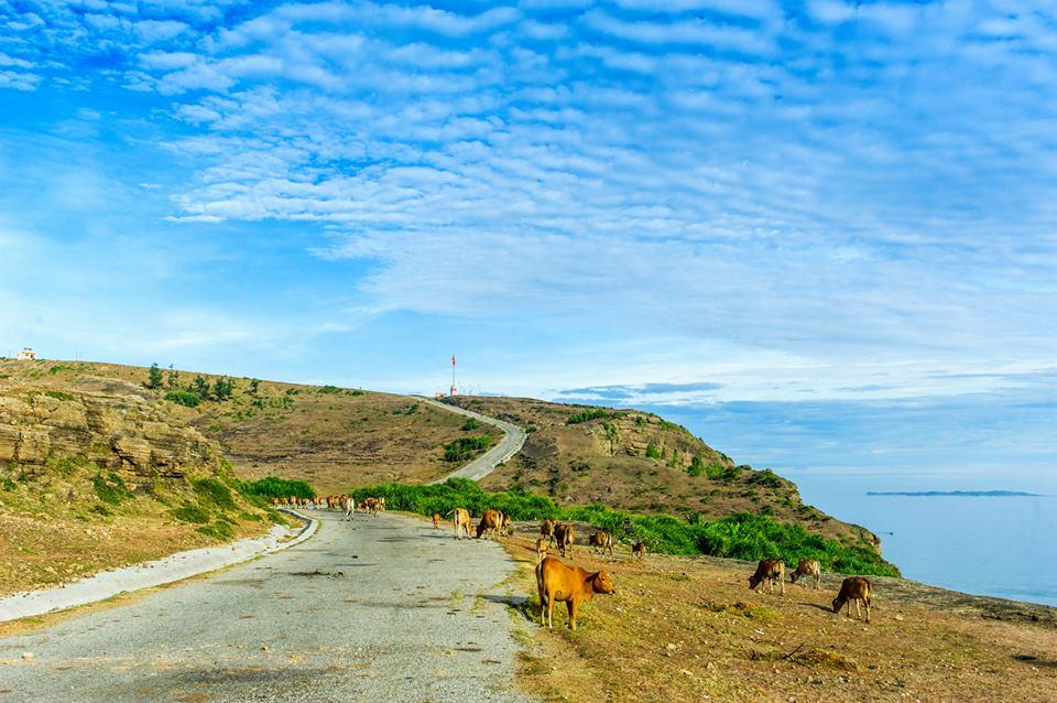 Cảnh đẹp đảo Lý Sơn như tranh (Nguồn Lê Hồng Hà)