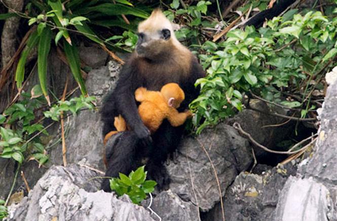 Đảo Khỉ với trải nghiệm khiến bạn bất ngờ (Ảnh: ST)