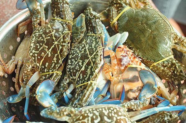 Ghẹ xanh, đặc sản vùng biển (Ảnh: ST)