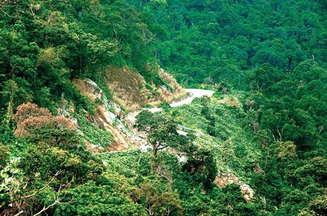Con đường đi lên đỉnh bàn Cờ bán đảo Sơn Trà