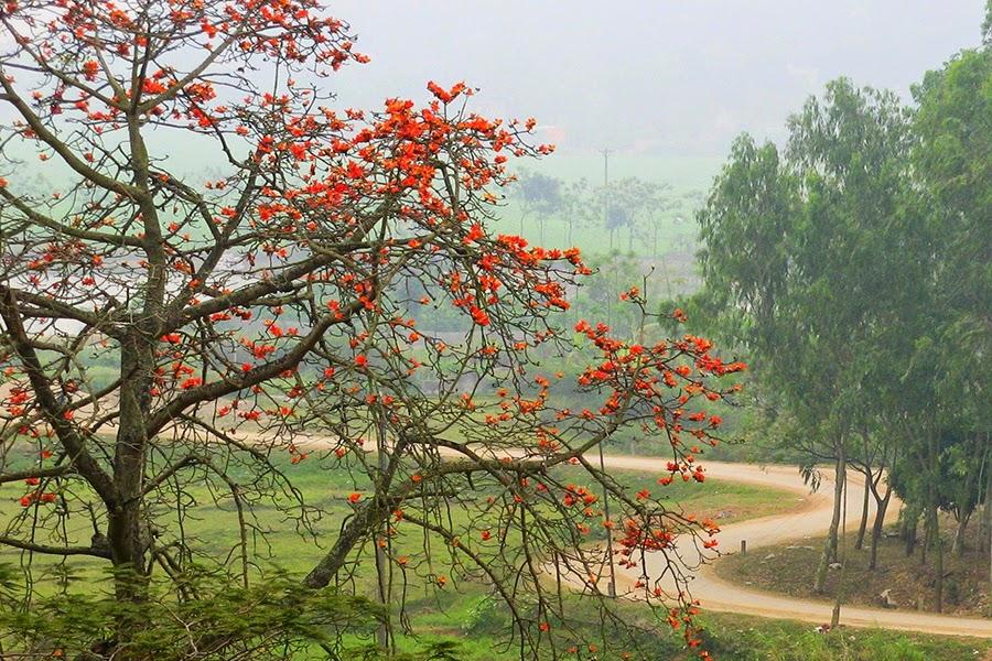 núi trầm mùa hoa gạo