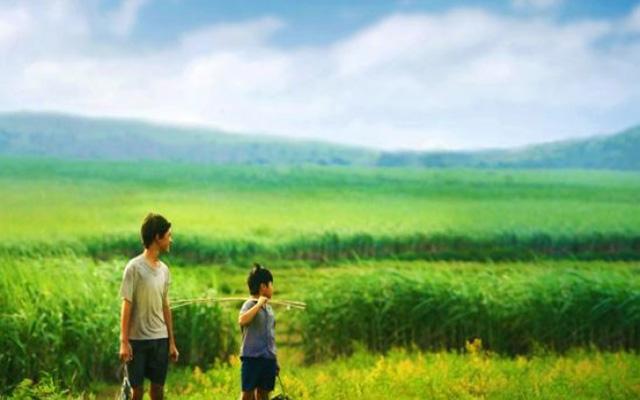Cánh đồng Phú Yên đẹp mộng mơ qua ống kính của đạo diễn Victor Vũ (Ảnh: sưu tầm)