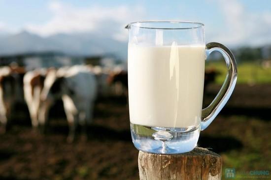 Sữa bò tươi nguyên chất Mộc Châu (nguồn sưu tầm)