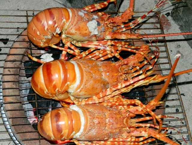 Khám phá ẩm thực tôm hùm ở đảo Bình Ba ( ảnh sưu tầm)