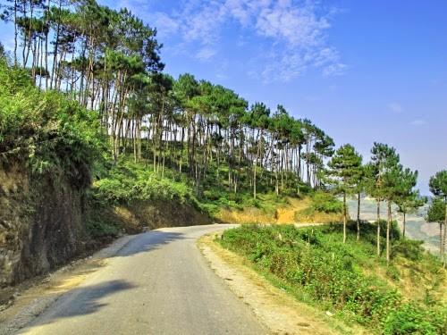 Con đường xinh đẹp với rừng thông hai bên