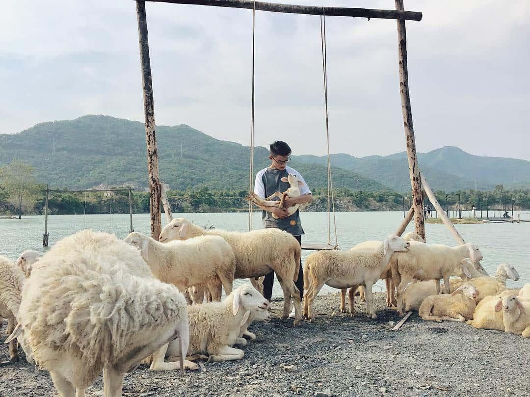 Chụp ảnh cùng đàn cừu dễ thương (Ảnh: ST)