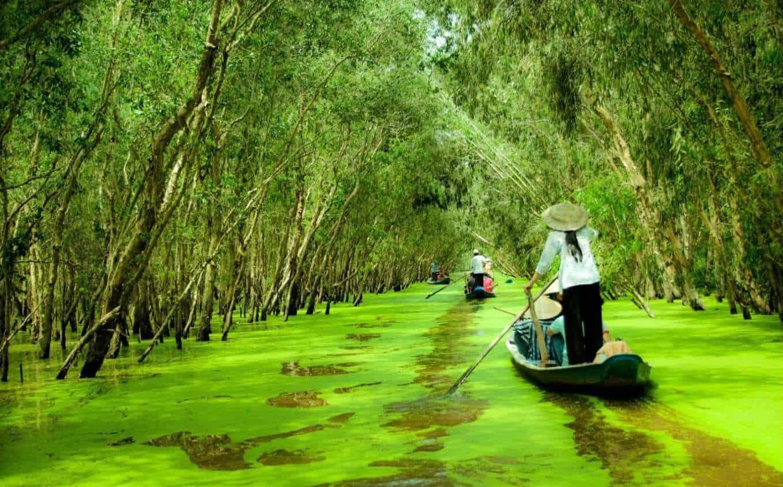 Chiêm ngưỡng vẻ đẹp của rừng tràm xanh mát một màu (ảnh sưu tầm)