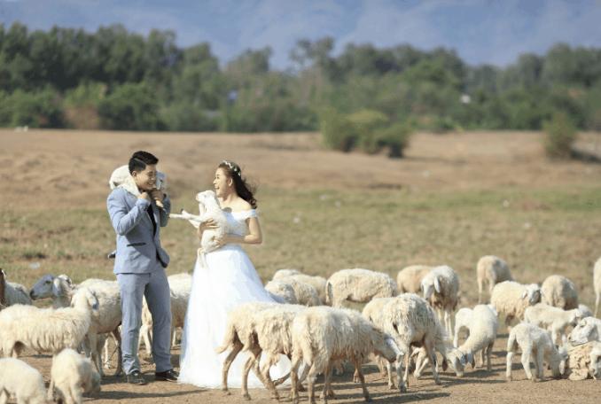 Điểm chụp ảnh đẹp đồng Cừu hấp dẫn