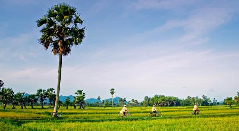 Đồng lúa Châu Đốc xanh ngút ngàn luôn là nét tiêu biểu cũng như niềm tự hào của người dân xứ An Giang (ảnh sưu tầm)