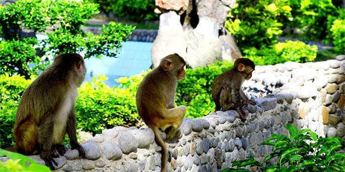 Những chú khỉ đặc biệt của đảo khỉ