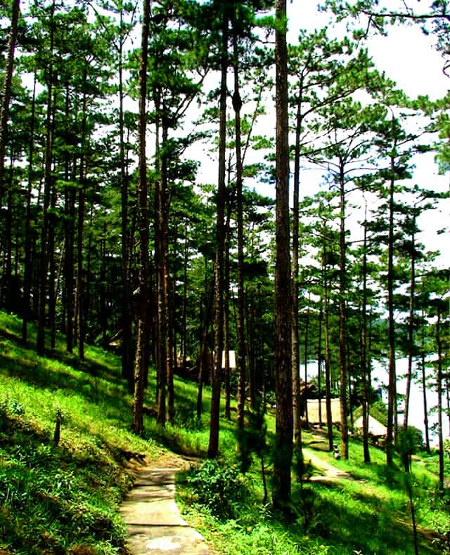 Đi quanh rừng thông tận hưởng bầu không khí trong lành hồ Trại Tiểu