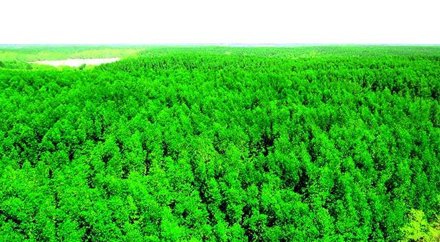 Lá phổi xanh của mẹ thiên nhiên đảo khỉ Cần Giờ TP HCM(Ảnh: ST)