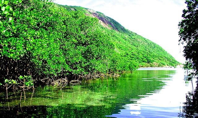 Image result for vườn quốc gia côn đảo