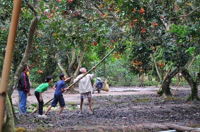 Ghé thăm vườn trái cây Cồn Phụng