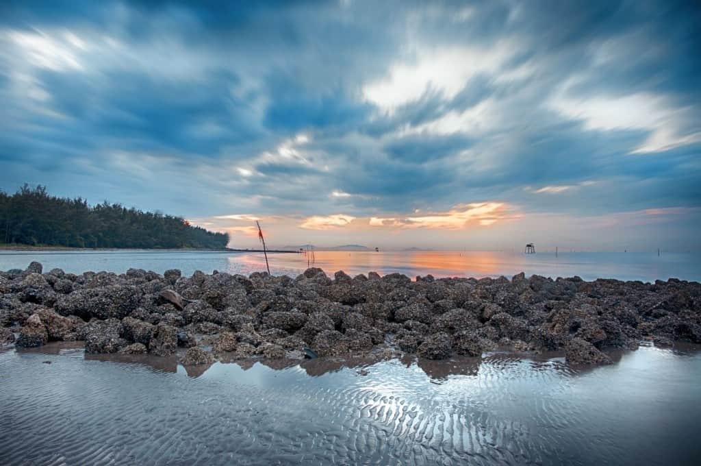 Biển Cần Giờ TP HCM không có biển xanh cát trắng như những bãi biển khác