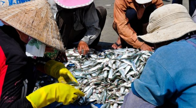 Có rất nhiều loại cá (Ảnh: ST)