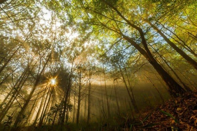 Nắng sớm tại Chùa Linh Quy Pháp Ấn