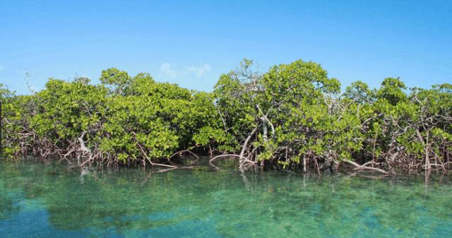 rừng ngập mặt vàm sát là một điểm du lịch trong hệ sinh thái cần giờ