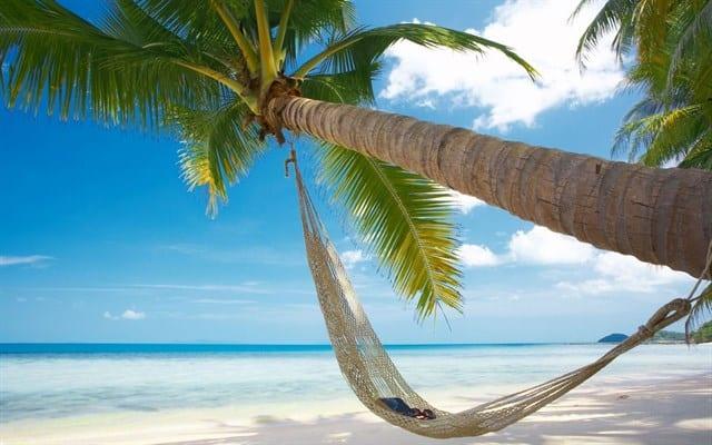 Tận hưởng buổi sáng trong lành dưới bóng mát hàng dừa xanh
