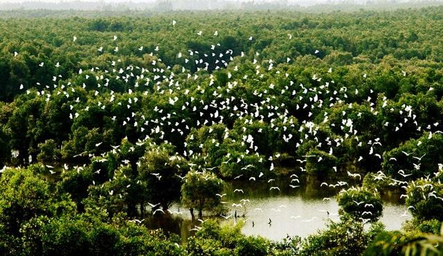 Hình ảnh khu du lịch vườn cò Bằng Lăng