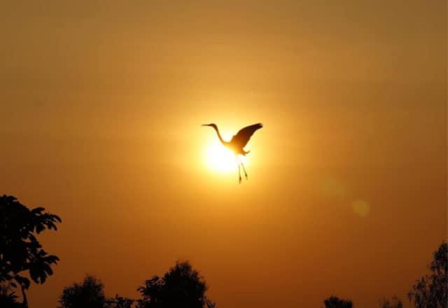 Cánh chim trở về sau một ngày dài kiếm ăn