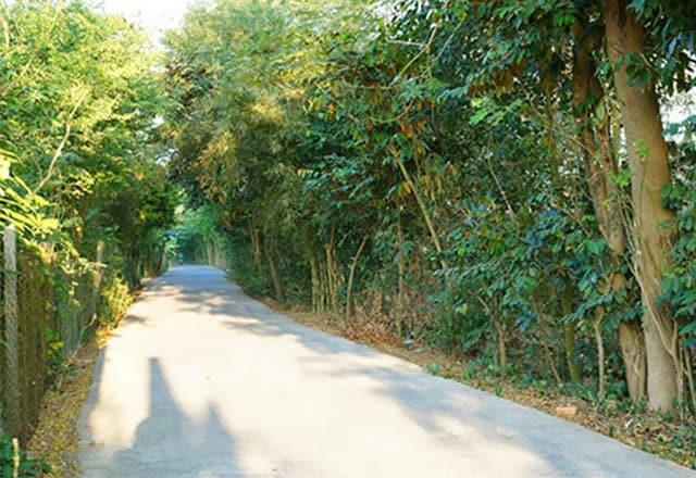 Những hàng cây xanh tỏa bóng mát trên lối vào vườn cò