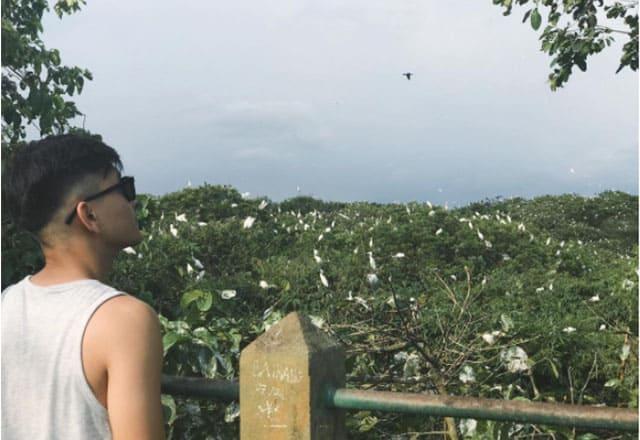 Vườn cò Bằng Lăng nhộn nhịp từng cánh chim bay về