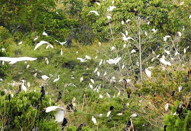 Cận cảnh hệ sinh thái nơi vườn cò Bằng Lăng