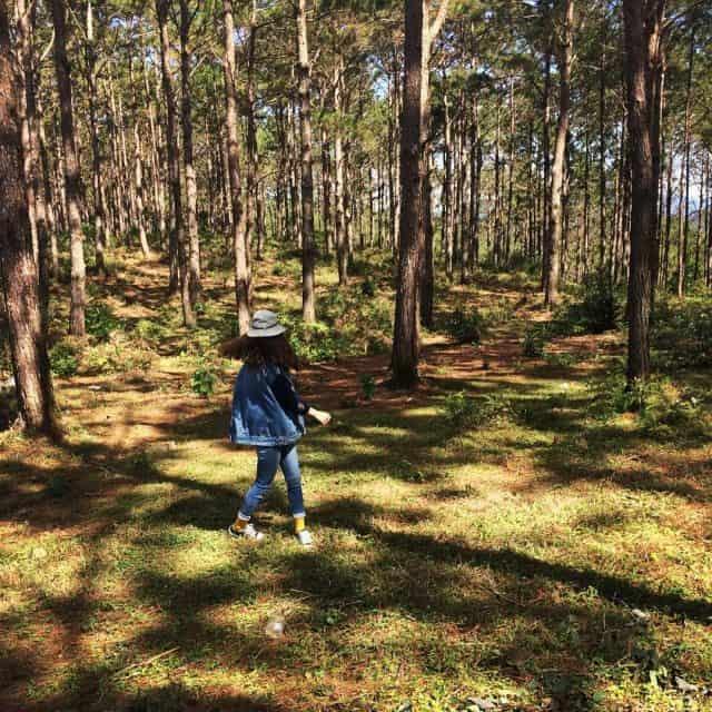 Lạc vào rừng thông Măng Đen (Ảnh sưu tầm)