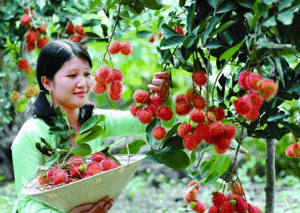 Miệt vườn trái cây (Ảnh ST)