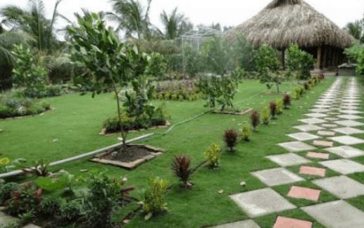 Vẻ đẹp của vườn sinh thái Hoa Súng sẽ làm lòng người ngây ngất