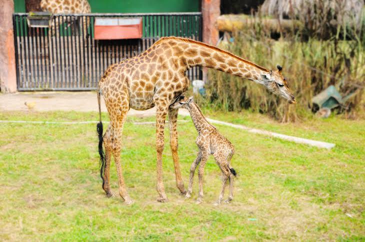 Sở thú Đại Nam với nhiều loài động vật