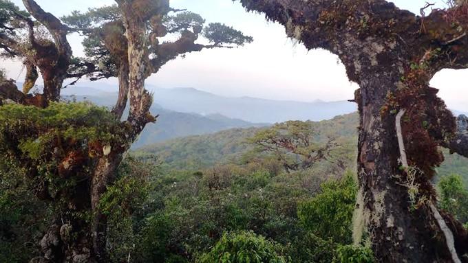 Những cây cổ thụ trên đỉnh núi chắc đã tồn tài từ hàng trăm năm tuổi. (Ảnh ST)