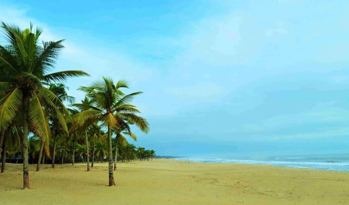 Những hàng dừa bạt ngàn ở bãi biển Quảng Nam. (Ảnh ST)