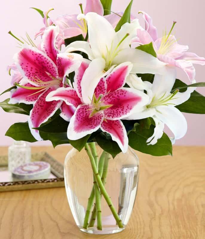 Hình ảnh hoa Lily