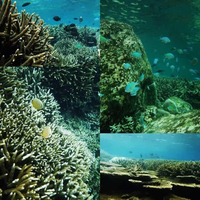 Đây là nơi ẩn náu nhiều rặng san hô đẹp, cá biển lạ và quý (Ảnh sưu tầm)