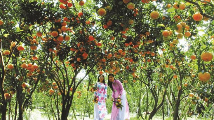 Thích thú khi được hái trái ở vườn trái cây Mỹ Khánh (Ảnh ST)