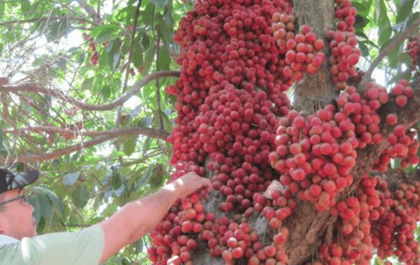 Vườn trái cây trĩu quả, ăn ngọt lịm