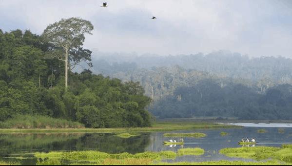 Hệ sinh thái ở vườn quốc gia Nam Cát Tiên vô cùng đa dạng