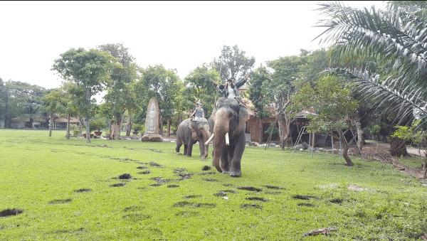 Hoạt động cưỡi voi mới lạ