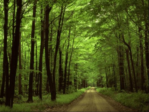 Đi bộ khám phá rừng sẽ thấy rất nhiều điều thú vị